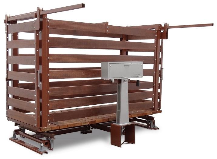 pesagem de bovinos balanca bovina