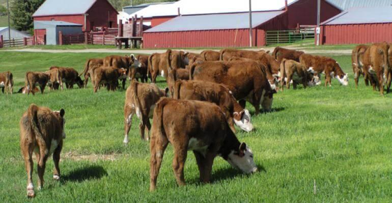 controle de gado