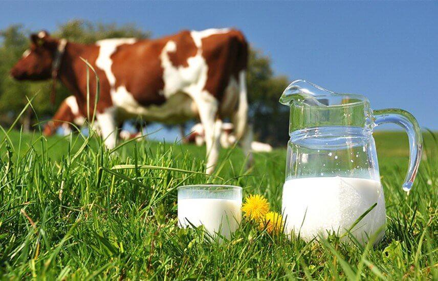 aumente a produção de leite