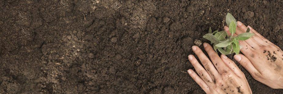 Trichoderma: fungo que ajuda no controle biológico de doenças em diferentes culturas