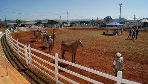 Cavalo campolina