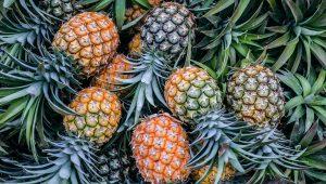 Plantio de abacaxi: guia completo