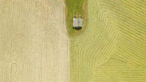 Saiba como o fosfato natural pode enriquecer o solo da sua lavoura