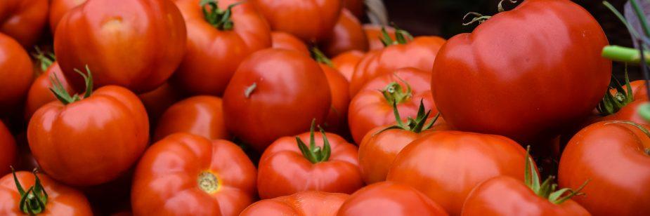 Cultivo de tomate: dicas para melhorar a produção
