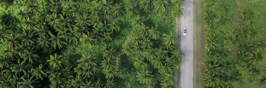 Bioenergia: entenda a importância dessa fonte de energia sustentável para o futuro