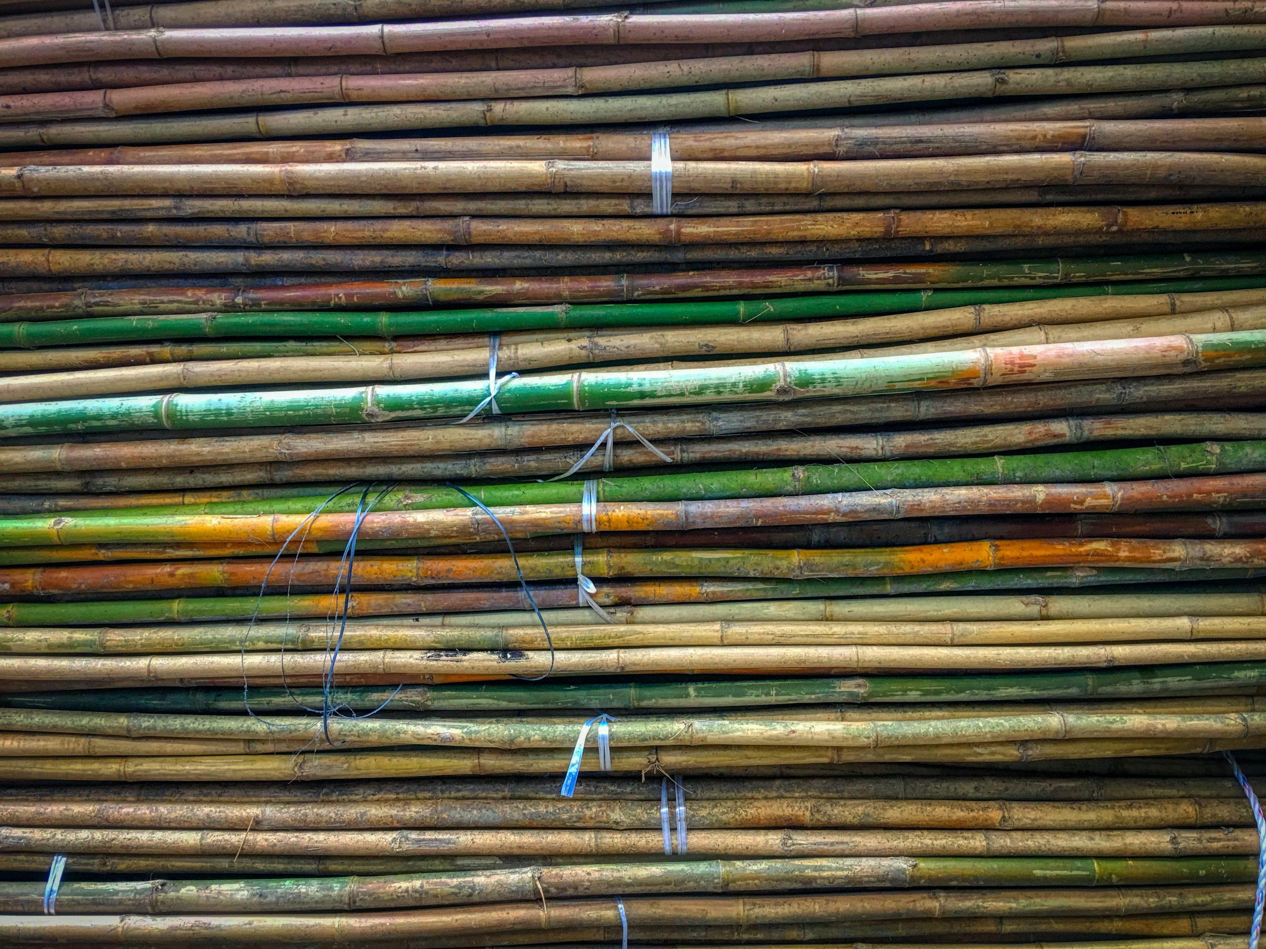 Plantio de cana-de-açúcar: guia completo
