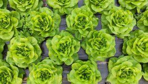 Aquaponia: entenda o conceito dessa novidade para produção de alimentos