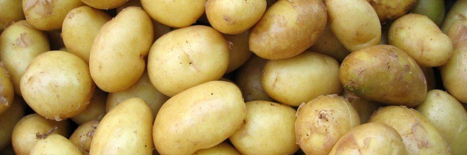 Plantio de batata: do cultivo à colheita